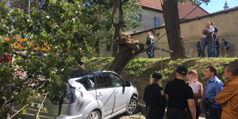 Як діяти, якщо дерево впало на автомобіль?